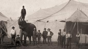 American Experience: The Circus: Season 1: Pt. 1